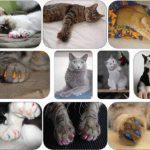 IMAKAR® Protège-griffes chat, 20 PCS fournis avec un tube de colle et un applicateur de précision. Non Toxique & faciles à utiliser. Ce cache griffe chats est la solution idéale pour protéger votre intérieur (TRANSPARENT) de la marque IMAKAR image 3 produit